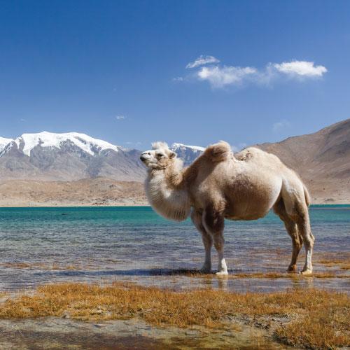 Route de la soie, Grand tour de Xinjiang 19 jours (2022)