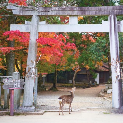 Grand tour du Japon 23 jours (2022 automne)