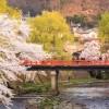 Grand tour du Japon 23 jours (2022)
