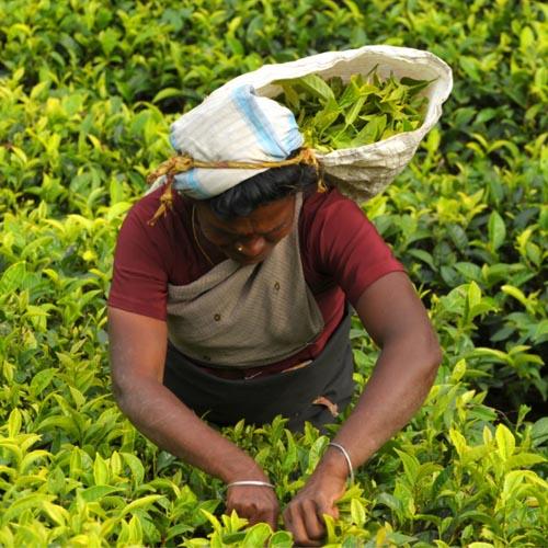 Nord et Sud du Sri Lanka 18 jours