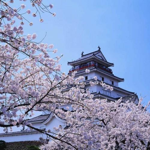 Japon splendide 18 jours (2019 printemps)